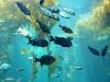 monterey-bay-aquarium5