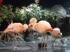 monterey-bay-aquarium7