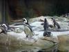 monterey-bay-aquarium8