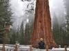sequoianp1