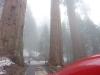 sequoianp2
